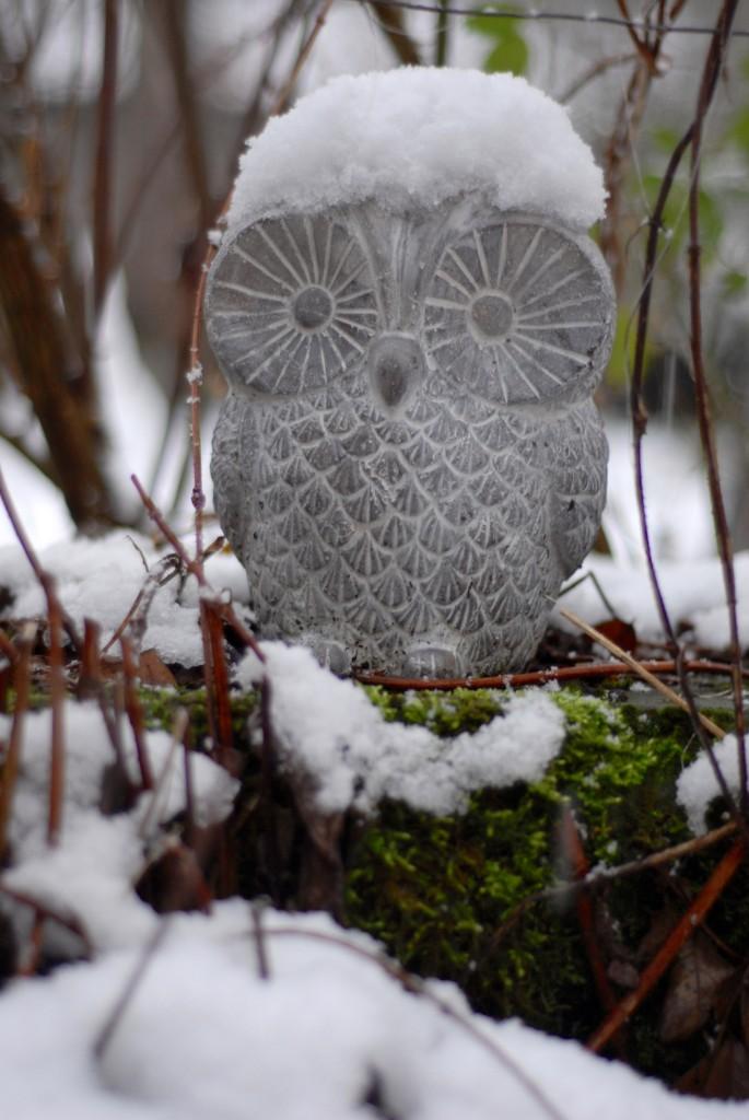 The von Wartburg owl